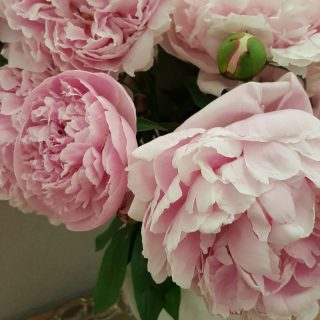 peonies, aloverlylife a loverly life home and garden