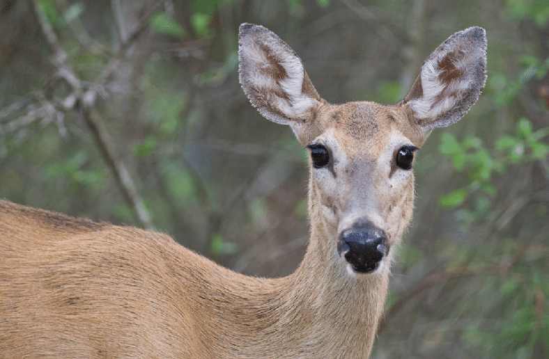 a loverly life; doe a deer; deer sighting; be kind; animals; nature; kindness; helping; help
