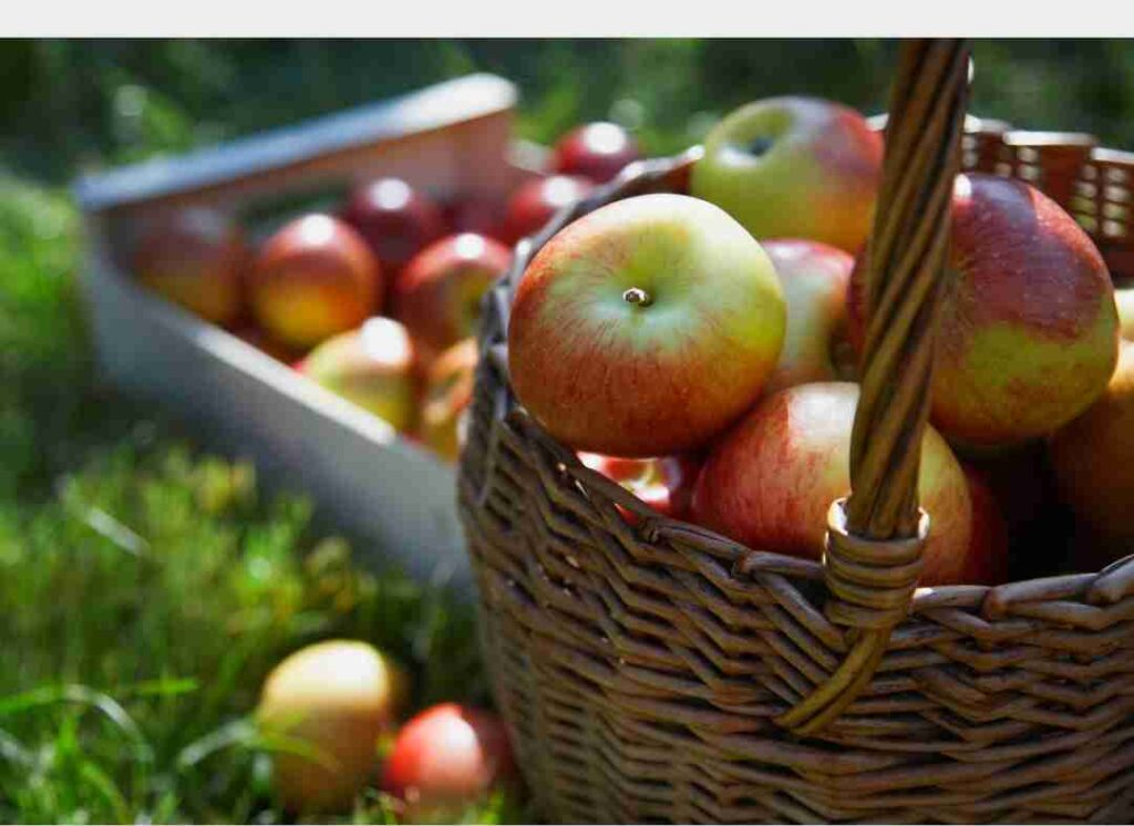 basket of apples | a loverly life easy apple butter recipe